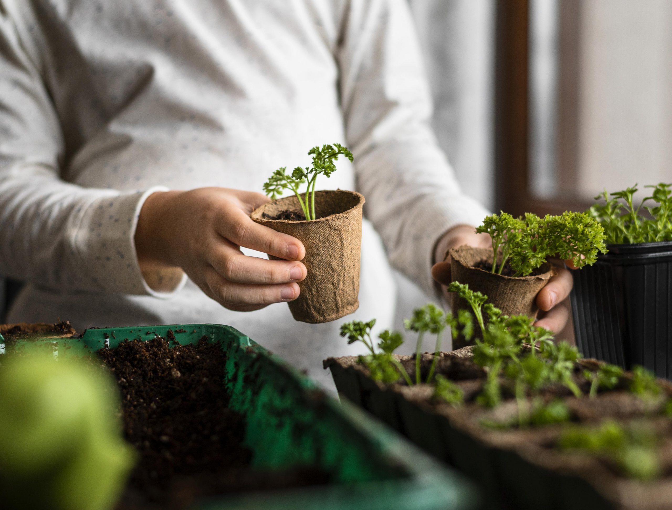 Jardinería: una labor familiar y un goce para los niños.